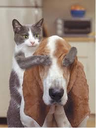 les toutou!!! image gag dans Rigolo chat-chien