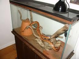 snake terrariums