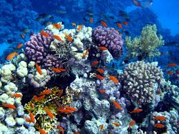 coral reef marine life