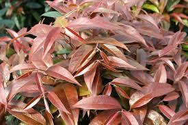 small evergreen plants