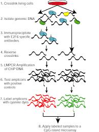 chip chromatin