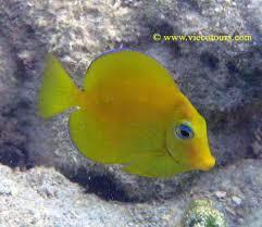 caribbean tropical fish