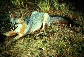 pictures of omnivores animals