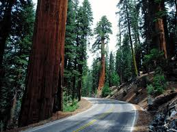 redwood national park pictures