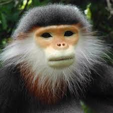 extinct primates