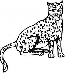 cheetah coloring sheets
