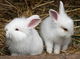 rabbits pet