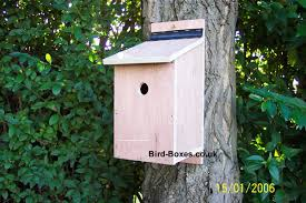 blue bird boxes