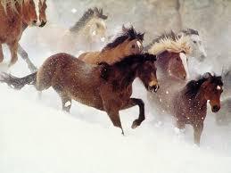 caballos y yeguas