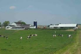 dairy farm photos