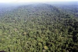 rainforest in ecuador