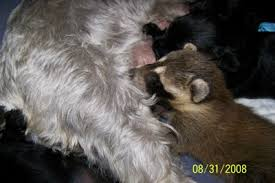 baby raccoon for sale