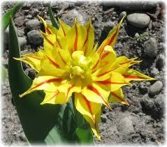 bulb flower