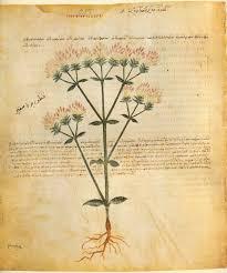 herb illustrations