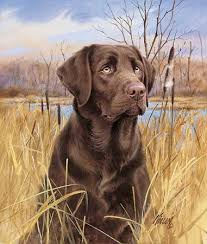 chocolate labs dogs