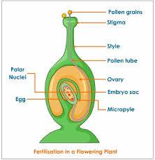 fertilization plant