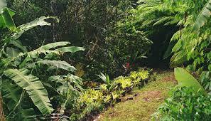tropicals plant