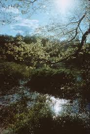 disney landscapes