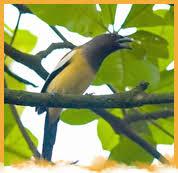 kerala birds