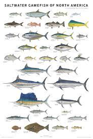 fish saltwater