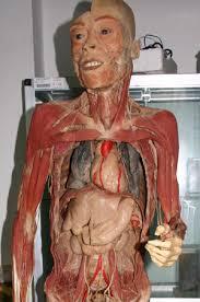 human body photos