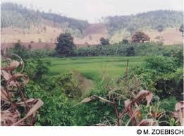 thailand deforestation