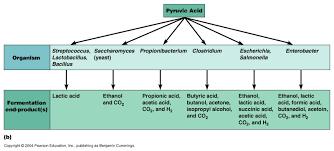lactic acid fermentation process