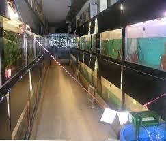 breeding aquariums