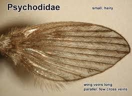 flies wings