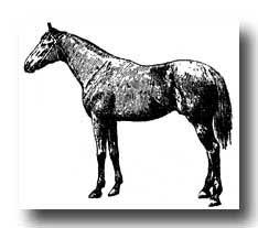 horses illustrations