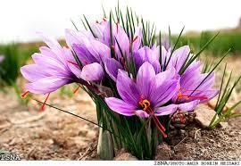 flower iran