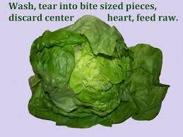 lettuce bibb