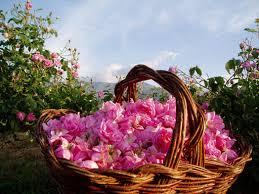 rose bulgaria