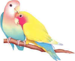 lovebirds picture