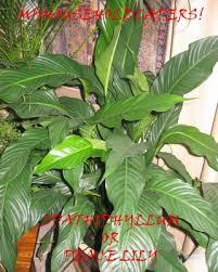 common household plants
