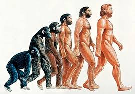 evolution of humans