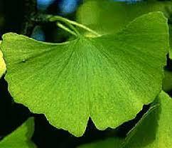leaf pics