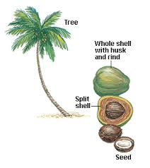 coconut tree products