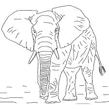 dessins elephant