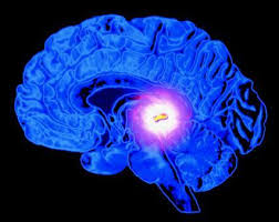 pineal glandula Glândula Pineal   Ciência Explica Mundo Espiritual