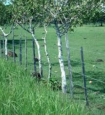 live fences