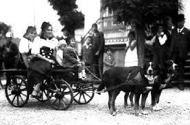 dog pulling carts