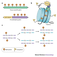 epigenetic methylation