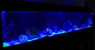 moonlight aquarium