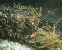 deep ocean habitat