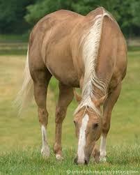 palomino horse pics