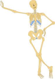 simple human skeleton