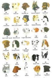 breeds of dogs pictures