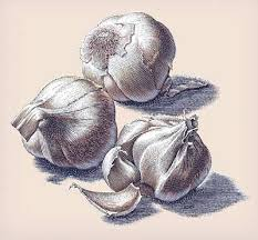 garlic art