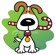christmas dog photo